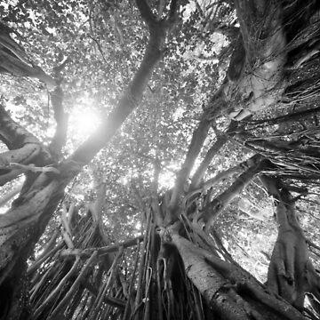 Banyan Tree by chuckirina