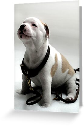 Staffordshire Bull Terrier Puppy, Watercolor Style Art Print by Michael Tompsett