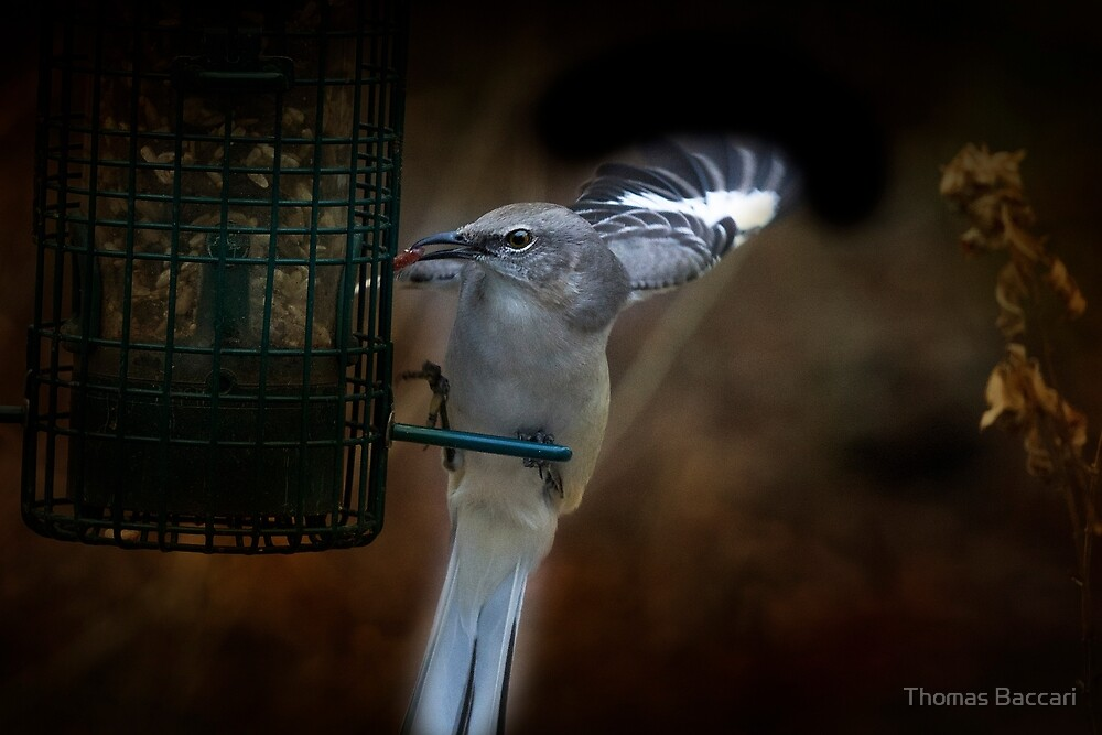 GRABBING THE SEED by TJ Baccari Photography