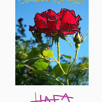 Rose from Palestine by Hudda