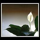 Elegant Simplicity by Nina Toulmin