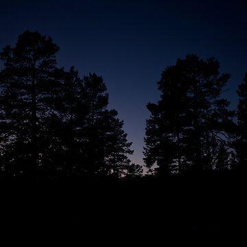 Wander Into Darkness by vanpeltfoto