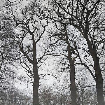 Hoge bomen ~ High trees by CamphuijsenArt