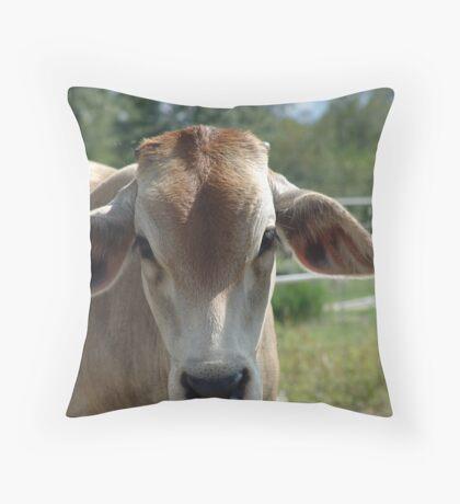 Brahma calf Throw Pillow