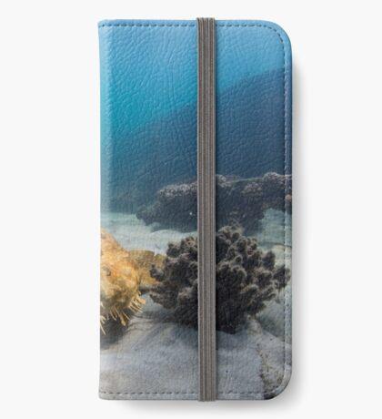 Wobbegong, Tangalooma Wrecks iPhone Wallet