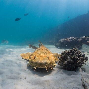 Wobbegong, Tangalooma Wrecks by KaraMurphy