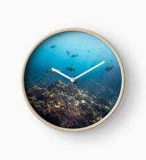 Flinders Reef Clock