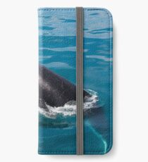 Humpback whale calf, Moreton Bay iPhone Wallet/Case/Skin