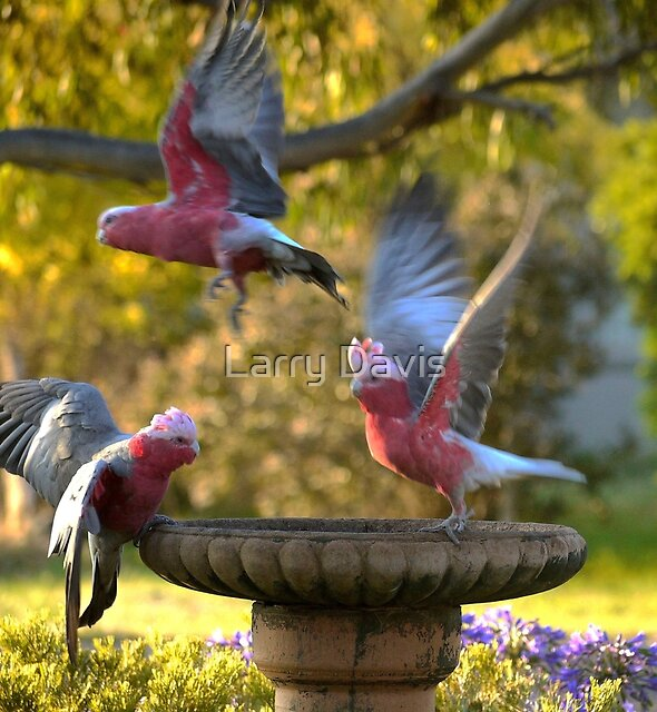 Wings by Larry Davis