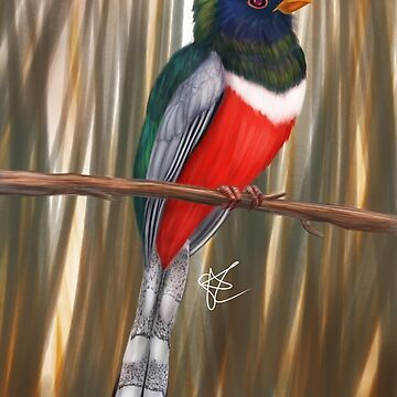 Elegant Trogon by Jakathine