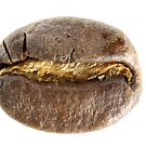 Coffee Bean by tdixon8875