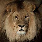 Lionheart by Caroline Gorka