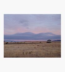 Plains of wooden clouds Photographic Print