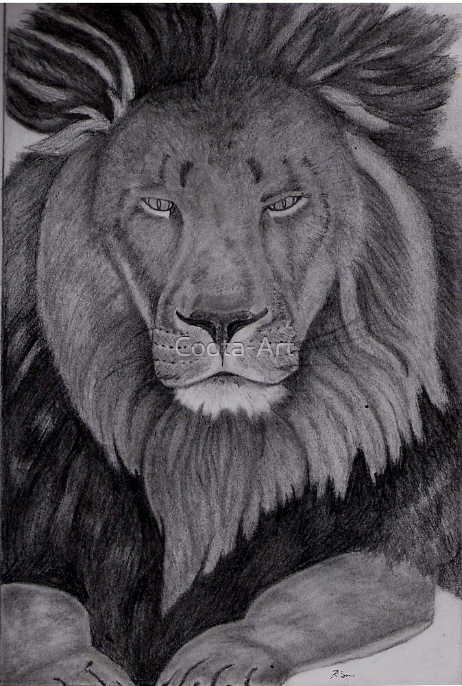 Lion by Coota-Art