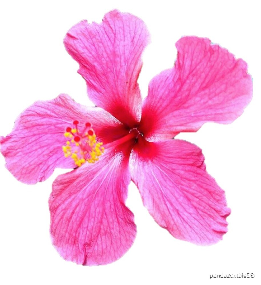 Hibiscus flower by pandazombie98 redbubble hibiscus flower by pandazombie98 izmirmasajfo Choice Image