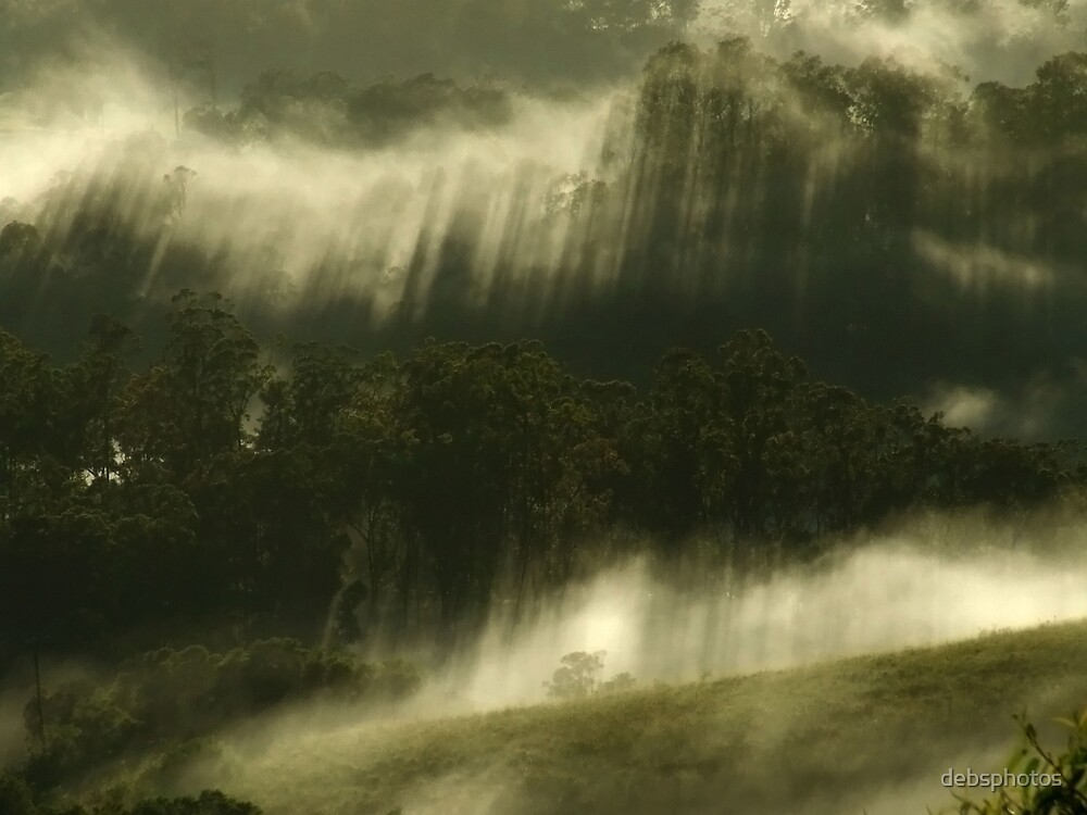 """""""Mist in the Trees"""" by debsphotos"""