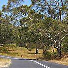 Megalong Valley NSW by StarKatz