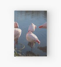 Flamingos 1 Hardcover Journal