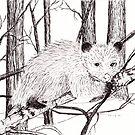 Possum by Linda Ursin