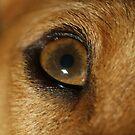 Look into my eyes by Auntymazza