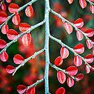 Red Leaves by Paul Scrafton