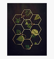 Bees in Space Photographic Print