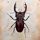 Stag beetle by Watercolor Naturalist