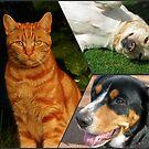 Feline and Canine Collage von BlueMoonRose