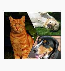 Feline and Canine Collage Photographic Print