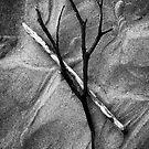 Driftwood by Paul Scrafton