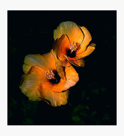 ALIEN FLOWERS 8 Photographic Print