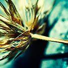 Dry flower by Paul Scrafton