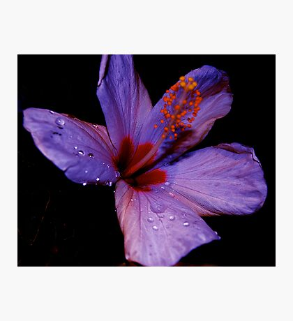 ALIEN FLOWERS 11 Photographic Print