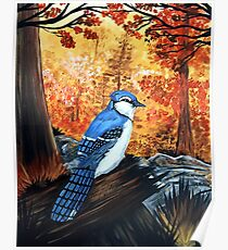 Blue Jay Life Poster