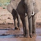 African Elephants River Crossing  by Dennis Stewart