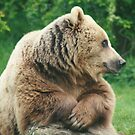 Bear Chillin by Amie Swannell