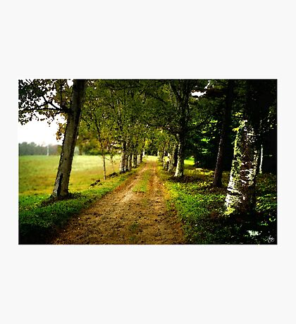 The Long Driveway Sandwich New Hampshire Photographic Print