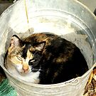 Cat In The Bucket by georgiaart1974