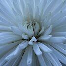 Plenty of petals by lizh467