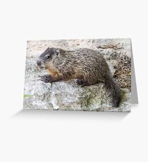 Groundhog Youth Greeting Card