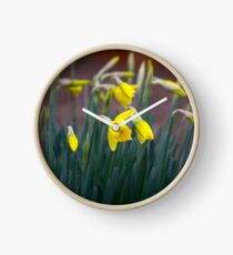 Daffodils about bloom Clock