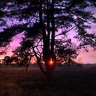 A Tree in Sunset colors by ienemien