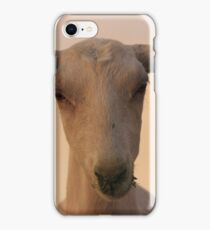 Goat in the suset iPhone Case/Skin