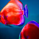 Red Fish by Paul Scrafton
