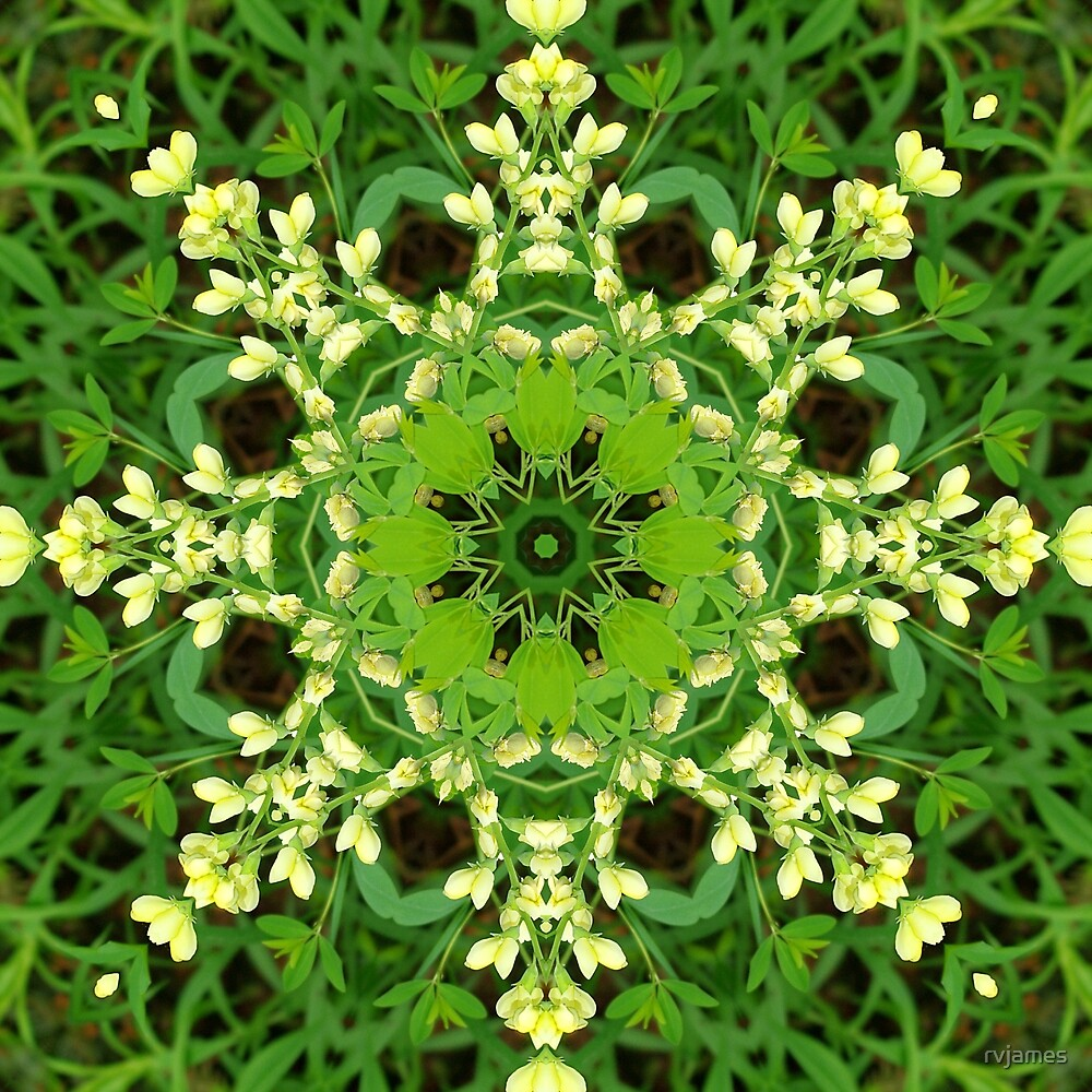 Cream and green botanical mandala - Baptisia flowers 3 by rvjames