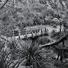 Bridge at Sheba Dam - Hanging Rock NSW Australia by Bev Woodman