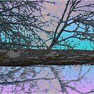 Icey Reflections by Deborah Dillehay