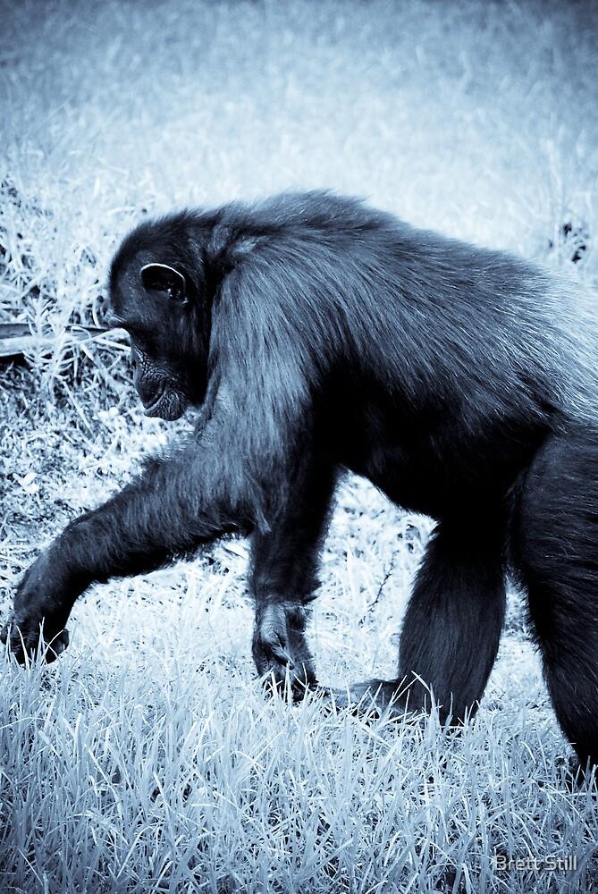 Monkey 2 by Brett Still