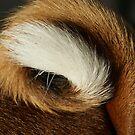 Doggy Tail by Auntymazza
