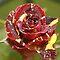 Sweet Photo Roses - Quick Challenge